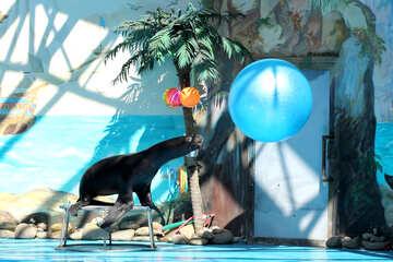 Circus with marine animals №25229
