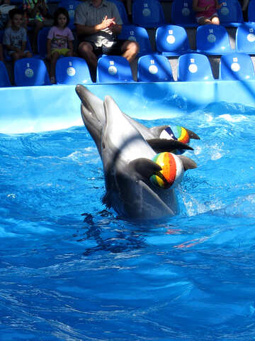 Funny dolphins №25352