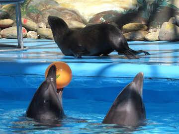 Fur Seals at the dolphinarium №25444