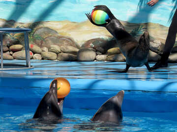 Fur seals and dolphins №25445