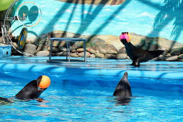Show at the dolphinarium №25265