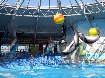 Dolphin shows №25314