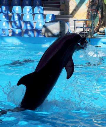 Dolphin with ball №25559
