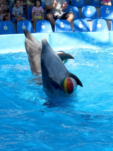 Dolphins with ball №25354