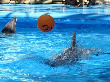 Дельфины играют с мячом №25450