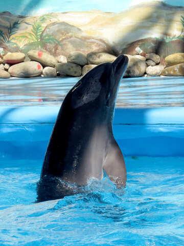 Curious dolphin №25372