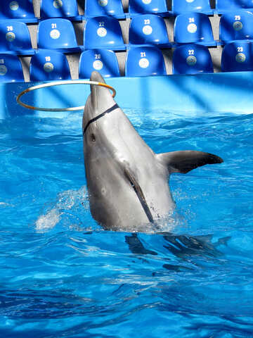 Trained dolphin №25310