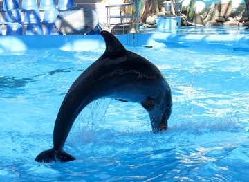Dolphin №25357