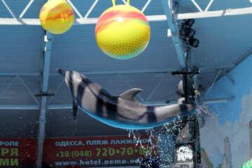 Dolphin jump №25554