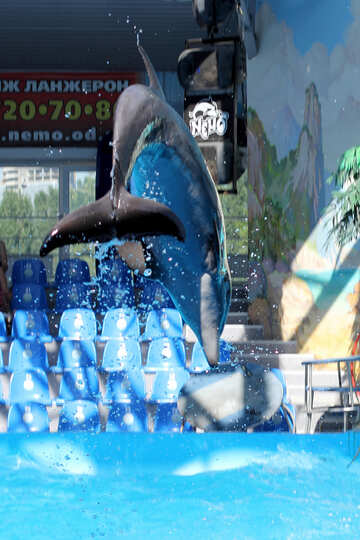 Dolphin jump №25566