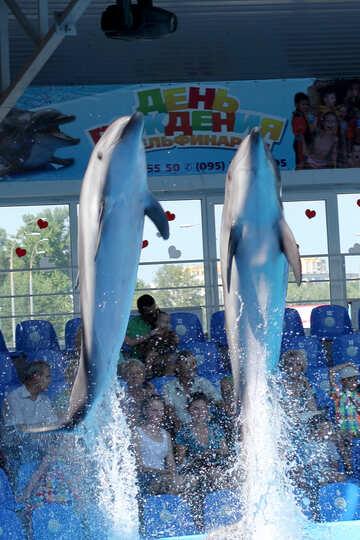 Dolphin rocket №25570
