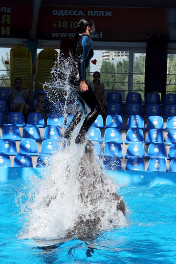 Dolphin shows №25142