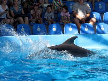 Splashing dolphin №25375