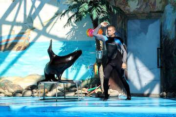 Shows with marine animals №25237