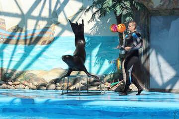 Shows with marine animals №25238