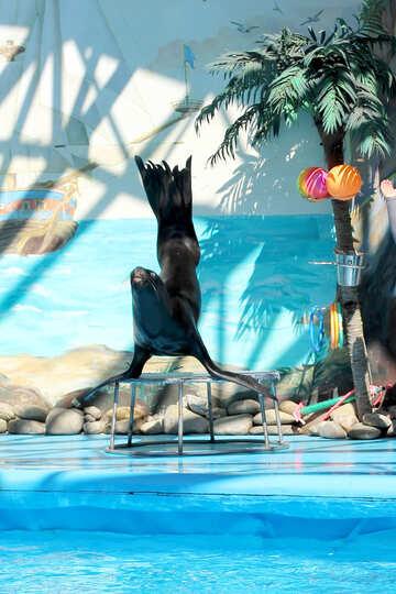 Shows with marine animals №25239