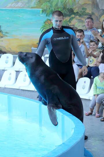 Shows with marine animals №25241