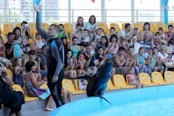 Shows with marine animals №25244