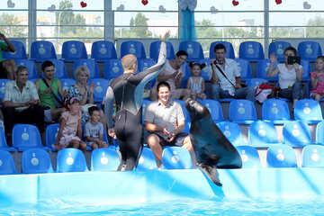 Shows with marine animals №25245