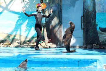 Shows with marine animals №25248