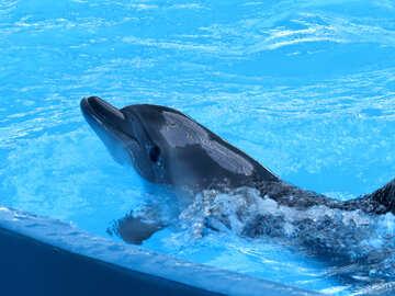 Smart dolphin №25374