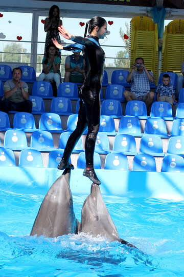 Dolphin shows №25132