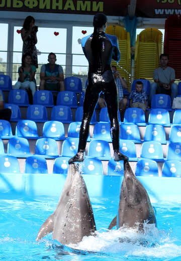 Dolphin shows №25136