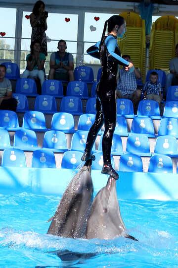 Shows with marine animals №25135