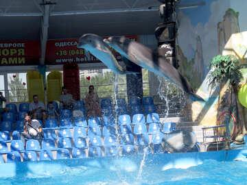 Show at the dolphinarium №25360