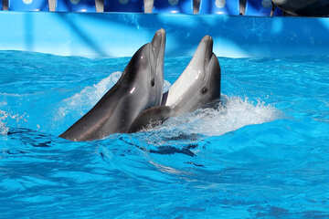 Dolphins dancing №25525