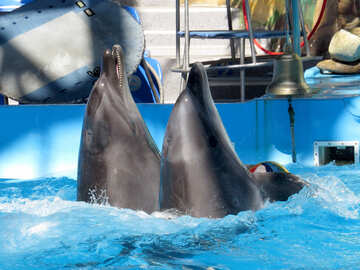 Dolphins of the dolphinarium №25349
