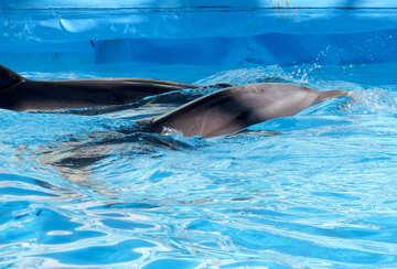 Dolphins in dolphinarium №25409