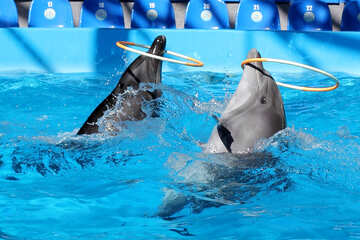 Funny dolphins №25532