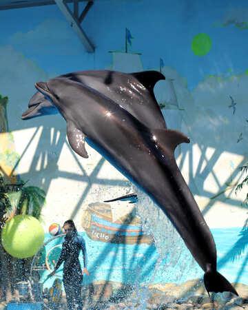 Dolphins jump №25579