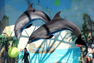 Dolphins play in the dolphinarium №25577