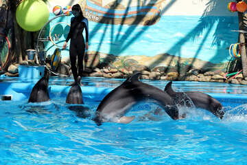 Dolphins at work №25561