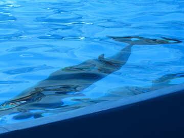 Dolphins underwater №25497