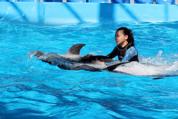 Swimming with dolphins №25524