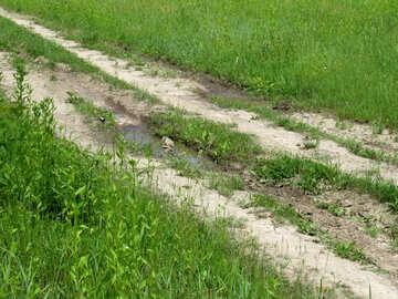 Dirt road №25124