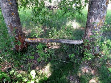 Panca seppellito tra gli alberi №25061