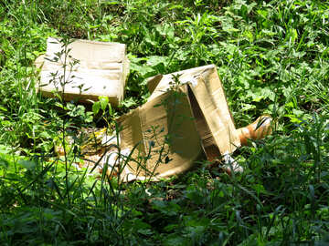 Garbage dump and expired products in the forest №25064