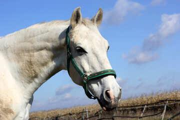 White Horse №25811