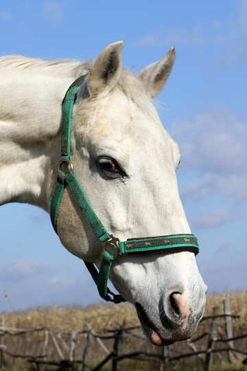 White Horse №25812