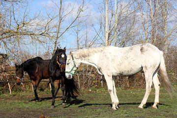 Domestic horses №25838