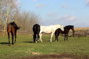 Four horses №25829