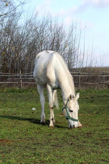 Gray horse on walk №25816