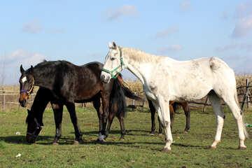 Tourism horses №25827