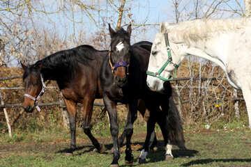 Horse walk №25839