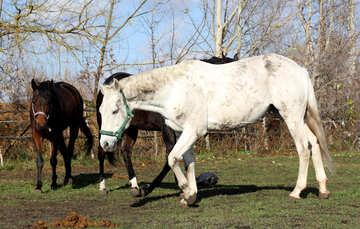 Walking horses №25837