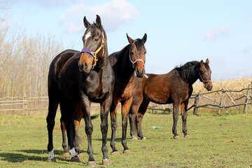 Drei Pferde №25836